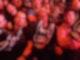 Kai beim WWE 1.jpg